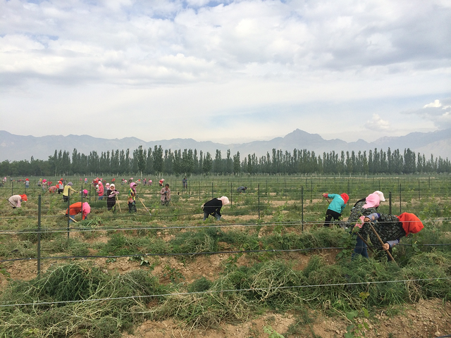 Ningxia is one of China's wine regions