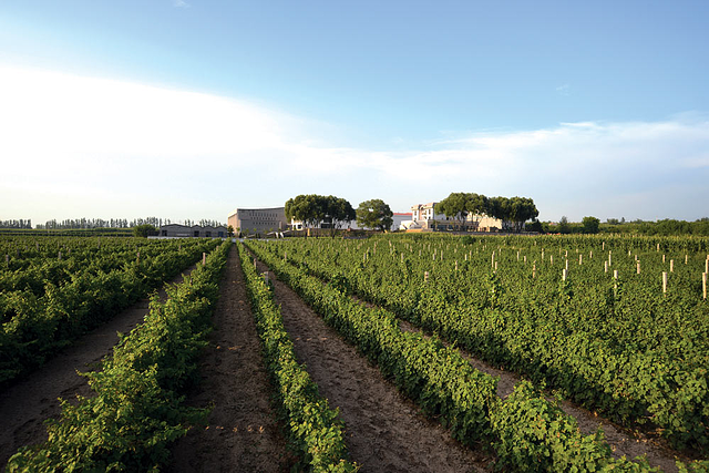 Shanxi is one of China's wine regions