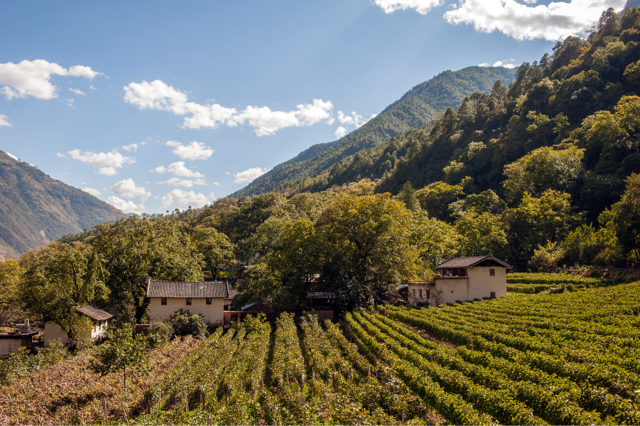 Yunnan is one of China's wine regions