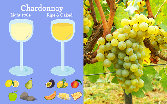 Aroma & Flavours of Two Chardonnay Styles