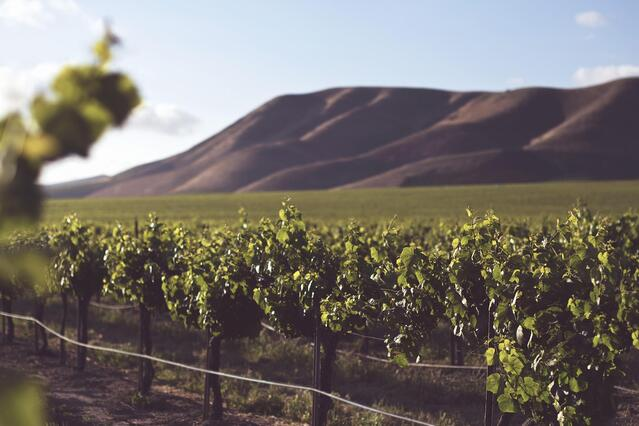 Terroir: The natural environment including soil, climate and topography