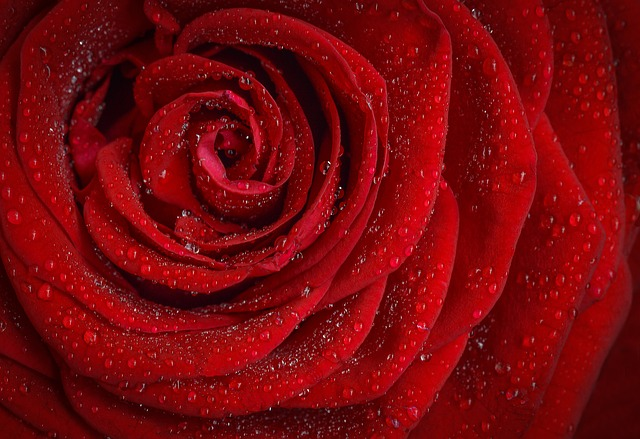 Red Rose - The Wines of Seduction.jpg