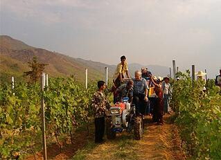 Aythaya Vineyard: Myanmar 1st Vineyard Estate is a top winery in Asia making Asian wines